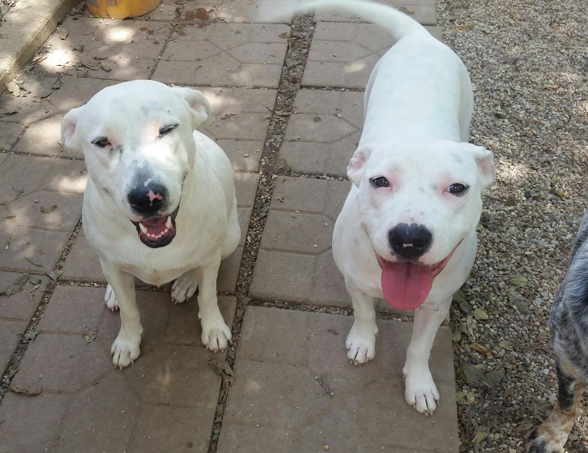 Happy dogs attending Cowtown Canines Daycamp